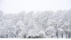Munich - Whiteout (cnmark) Tags: münchen munich germany deutschland bayern bavaria schwabing englischergarten englishgarden winter snow schnee wonderland trees bäume forest park highkey ©allrightsreserved