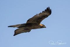 IMG-20180114-WA0010 (TARIQ HAMEED SULEMANI) Tags: sulemani tariq tourism trekking tariqhameedsulemani winter wildlife wild birds nature nikon