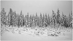 ...Schöneben / Upper Austria (shallowcreek) Tags: österreich upperaustria landschaft landscape winter schnee snow nebel mist himmel sky wald forest baum tree bw sw weis white