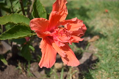 The Flower and the Bee (Karla Lucas) Tags: nature flower bee