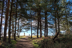 Out through the trees (jayneboo) Tags: walks shropshire haughmond dogs trees landscape light