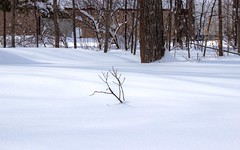 Drowning (Scottb211) Tags: winter trees gaylord gaylordmichigan gaylordmi upnorth northernmichigan