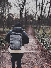 We Stood (gabyuchi1) Tags: nature gloomy woods song view fall dark grey moody colors