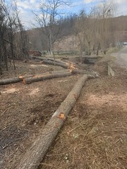 Kraljevcani Croatia - Tree Clearing (sean and nina) Tags: hrvatska croatia tree clearing cutting felling wood wooden bushes branches logs trunk brown green grass saw dust road tar mac truck river water stream petrinjcica nature outdoor outside village remote rural work labour farming