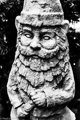 Gnome (Thad Zajdowicz) Tags: zajdowicz sanmarino california usa travel canon eos 5dmarkiii 5d3 dslr digital availablelight lightroom primelens 50mm ef50mmf12lusm statue sculpture gnome figure face blackandwhite bw black white monochrome beard
