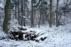 wood (Jos Mecklenfeld) Tags: winter snow schnee sneeuw forest wald bos nature natur natuur nulbos westerwolde sonya6000 sonyilce6000 selp1650 sonyepz1650mm niederlande nederland terapel groningen netherlands nl wood hout holz