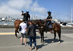 #SaturdayAfternoon in #SanFrancisco (Σταύρος) Tags: givingdirections twohorses onhorseback parkpolice sfpd police mountedpolice sanfrancisco thecity marinagreen saturdayafternoon marinadistrict sf city sfist санфранциско sãofrancisco saofrancisco サンフランシスコ 샌프란시스코 聖弗朗西斯科 سانفرانسيسكو kalifornien californië kalifornia καλιφόρνια カリフォルニア州 캘리포니아 주 cali californie california northerncalifornia カリフォルニア 加州 калифорния แคลิฟอร์เนีย norcal كاليفورنيا