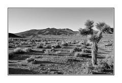 DSC_8001 BW (C&C52) Tags: paysage landscape nature désert arbre noiretblanc monochrome
