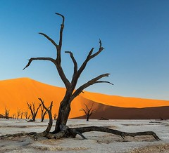 """Sossusvlei, Namibia. The name """"Sossusvlei"""" means """"dead-end marsh"""", owing this name to the fact that it was drainage basin without outflows for the ephemeral Tsauchab River. Most of the sandunes are over 80 meters high and are composed of 5-million-year-ol (Joel Santos - Photography) Tags: sossusvlei namibia the name means deadendmarsh owing this fact that it was drainage basin without outflows for ephemeral tsauchab river most sandunes over 80 meters high composed 5millionyearold sands thus making namib oldest desert earth c joel santos liveforthestory joelsantosphoto namibdesert instatravelling travelholic travelguide travels travelblogger travelgram photooftheweek travellers"""