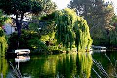 The weeping willow bent Over the quiet water ....Bay Farm Island. Alameda. San Francisco Bay Area, (valery_pokotylo) Tags: tree willow природа nature flora парк park красивый beautiful beaty cool цвет colour синий голубой blue зелёный green растение plant прогулка walk наслаждаться enjoy пруд pond река river вода water отражение reflection небо sky alameda california причал pier лодка boat дворик patio берег coast