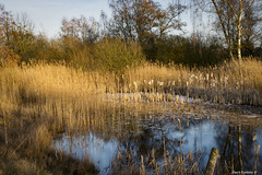 Hageven 3 (Geert E) Tags: nature landscape pont cane water bog pelt belgium limburg