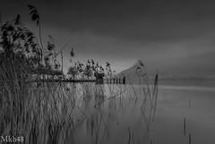 Brume matinale (paul.porral) Tags: flickr ngc landscape landschaft paysage paisaje lake winter foggy mist longpose longexposure countryside absoluteblackandwhite bnw noiretblanc monochrome mono fog outside water bw canon