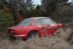 Alfa Romeo (mariburg) Tags: rotten marode alt old sonyalpha7ii sonyfe2470mmf4zaoss auto car alfaromeo