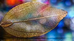 Gold Leaf - 6529 (ΨᗩSᗰIᘉᗴ HᗴᘉS +50 000 000 thx) Tags: jewel jewelry macro bokeh color gold metal belgium europa aaa namuroise look photo friends be yasminehens interest eu fr party greatphotographers lanamuroise flickering