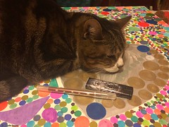 lili-coeur-rond© (alexandrarougeron) Tags: photo alexandra rougeron chat chatte bébé poilue animal sauvage felin chou beauté flickr lili loulou poupouce