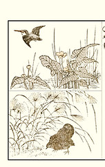 Top – water-lily and common kingfisher; Bottom eulalia grass and Japanese quail (Japanese Flower and Bird Art) Tags: flower waterlily nuphar japonicum nymphaeaceae eulalia grass miscanthus sinensis poaceae bird common kingfisher alcedo atthis alcedinidae quail coturnix japonica phasianidae