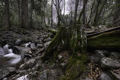 Downstream Bridalveil Falls Yosemite (Nikon Z7) (Siri Photos / Steve Siri) Tags: yosemite bridalveil falls bridalveilfalls nikonz7 z7 focusstack creek outdoors forest stevesiri siriphotos art artistic