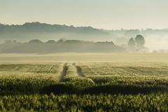 20180505-Canon EOS 6D-8136 (Bartek Rozanski) Tags: strud namur belgium ardennes belgie belgique ardennen spring field agriculture farm contrast pasture forest valley mist