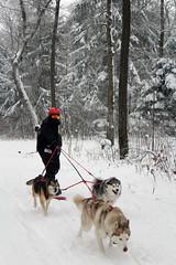 IMG_0049_AutoColor (LifeIsForEnjoying) Tags: snow mushing dog sledding dogs snowboard sled sitka nike kaskae