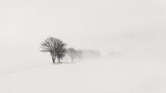 Whiteout (derliebewolf) Tags: hff flickrfriday monochrome white snow whiteout winter landscape light highkey nature hiking mist trees