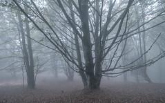 ALTUBE ZARRA 3 (juan luis olaeta) Tags: paisajes landscape natura fog forest bosque basoa pagoa laiñoa nieblas fujifilm photoshop lightroom altube