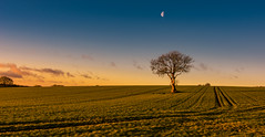 tree and moon (Phil-Gregory) Tags: tree moon nikon d7200 derbyshire tokina tokina1120mmatx tracks field goldenhour sky blue orange wideangle ultrawide superwide hi rez england enlightenment scenicsnotjustlandscapes landscapes landscapephotography