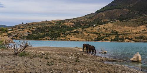 Caballos bebiendo en el pantano de Zahara-el Gastor