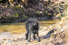 20190215-IMG_8725 (Alderbabbsack) Tags: struppi hund