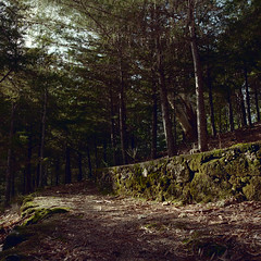 A walk in the forest (lebre.jaime) Tags: portugal beira covilhã forest park tree path hasselblad 500cm distagon c3560 kodak portra400 film120 analogic squareformat mediumformat