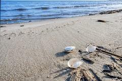 Empty seashells (Piotr Tylski) Tags: fujifilm xe1 fuji poland polska landscape vacations nature art europe travel luminar skylum fujixcamera fujixseries fujix mirrorless puckbay