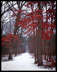 Leftover Color (michellewendling907) Tags: saturated red dupage waterfallglen illinois