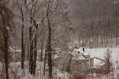 Hohenschwangau, Bavaria (Frightened Tree) Tags: hohenschwangau neuschwanstein castle bavaria germany munich garmisch partenkirchen winter snow landscape holiday travel wrexham nikon d750 tamron 2470mm trees woodland forest