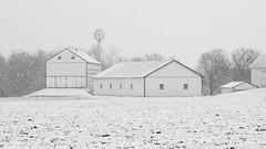 Winter White (tomcanon68) Tags: canon40d canon canon70300 canon70300mmf456isii winter snow cold pa pennsylvania lancastercounty barn windmill farm field bw blackandwhite monochrome