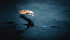 what happened was above the sea. (Caucas') Tags: seagull nikon d7000 ef50mm18 50mm18g karadeniz sinop trabzon balık martı gölge shadow giresun istanbul zonguldak samsun unreal surreal sea deniz red blue blacksea iskele mendirek muamma probelm blind dream time moment
