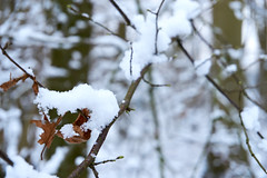 winter beauty (Jos Mecklenfeld) Tags: winter snow schnee sneeuw forest wald bos nature natur natuur nulbos westerwolde sonya6000 sonyilce6000 selp1650 sonyepz1650mm niederlande nederland terapel groningen netherlands nl