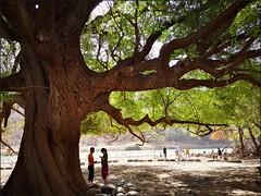 Unter der alten Tamarinde (gatierf) Tags: tamarinde oman dhofar tree menschundnatur