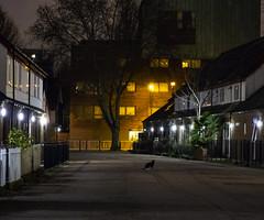 Cat in the Night (London Less Travelled) Tags: uk unitedkingdom britain england london city urban street suburban suburb suburbia southlondon southwark bermondsey night dark estate cat