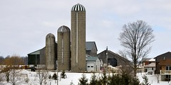 Large farm operation with three concrete silos - Wellington County, Ontario. (edk7) Tags: nikond300 edk7 2013 canada ontario wellingtoncounty farm barn silo concrete weatheredwood rustycorrugatedgalvanizedsteelshed architecture building oldstructure winter snow field fence house tree utilitypole symmetry