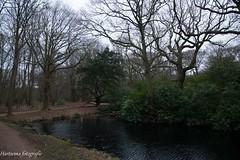 forest (alex.hartsema) Tags: forest bos water voetpad weg groen green sky lucht boom tree leaf blad bladeren westhoven nederland zeeland walcheren