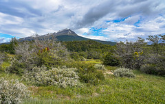 The forests of Tierra del Fuego / Леса Огненной Земли (Vladimir Zhdanov) Tags: travel argentina ushuaia tierradelfuego nature landscape mountains mountainside forest tree snow grass sky cloud