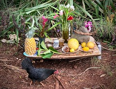 Reviewing (not being) the offering (kimbar/Thanks for 4 million views!) Tags: oahu hawaii offering waimea chicken heiau