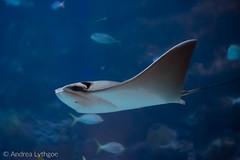 Denver Aquarium-9 (shutterdoula) Tags: denver denveraquarium aquarium lensbaby seeinanewway trio28