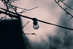 Glühlampe einer Lichterkette gegen Abend -  19. März 2019 - Tarbek - Schleswig-Holstein (torstenbehrens) Tags: canon eos 40d glühlampe einer lichterkette gegen abend 19 märz 2019 tarbek schleswigholstein