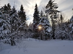 with setting sun (BryanAlexander) Tags: snow trees vermont ripton