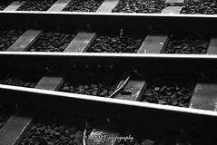 On the right track. (Please follow my work.) Tags: blackandwhite blackwhite bw biancoenero brilliantphoto brilliant blanco blancoynegro blancoenero city dark d7100 england enblancoynegro ennoiretblanc excellentphoto excellent flickrcom flickr google googleimages gb greatbritain greatphoto greatphotographers inbiancoenero interesting leeds ls1 leedscitystation mamfphotography mamf monochrome nikon nikond7100 northernengland noiretblanc noir negro photography photo pretoebranco photograph photographer quality qualityphotograph railway railwaystation railwaylines railwaytrack rail schwarzundweis schwarz sex track uk unitedkingdom upnorth westyorkshire yorkshire zwartenwit zwartwit zwart