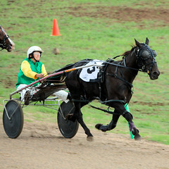 PACING AT THE TOOWOOMBA ROYAL SHOW (16th man) Tags: toowoomba toowoombaroyalshow canon eos eos5dmkiii horse trotting pacing sulky harnessracing