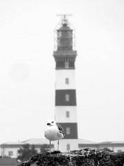 16 09 04 Phare du Créac'h (2) (pghcork) Tags: phareducréach phare créach ouessant ushant finistere bretagne brittany 29 france 2016 lighthouse