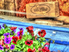 Violin Shop Window, 6/100X (clarkcg photography) Tags: violinshop tools woodwork craftsman repairs carve shape wood pansies flower pansy saturated hdr color saturatedsaturday 100xthe2019edition 100x2019 image6100 streetphotography