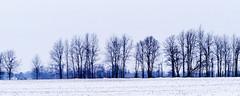 (joeldinda) Tags: olympus omdem1mkii em1 omd em1ii 2019 winter weather snow michigan eatoncounty roxandtownship roxana fields tree 4458 february