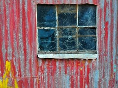 A window (holly hop) Tags: redshed shed window tin corrugated corrugatediron rust rusty rustyandcrusty hww 100x